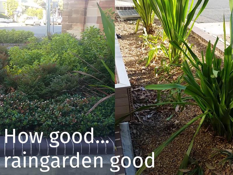 20150102 0210 How good... raingarden good.jpg