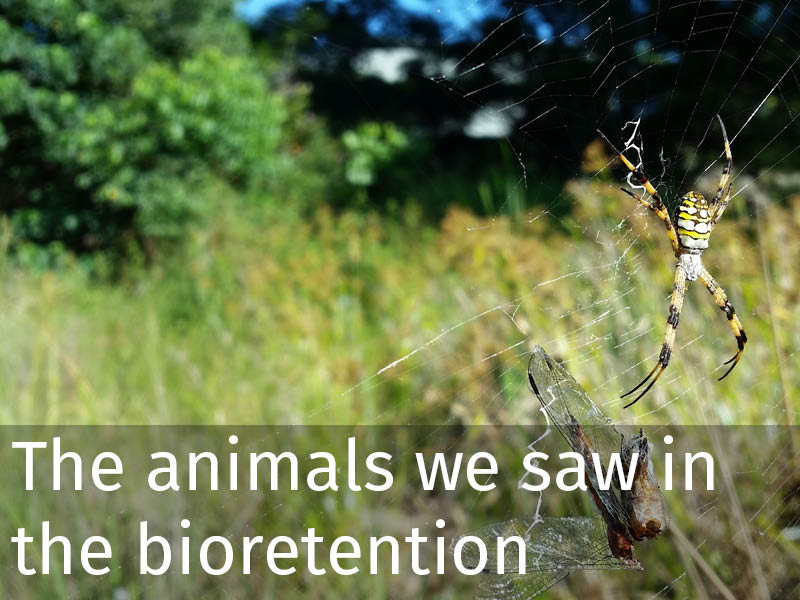 20150102 0228 The animals that we saw in the bioretention that we visited.jpg