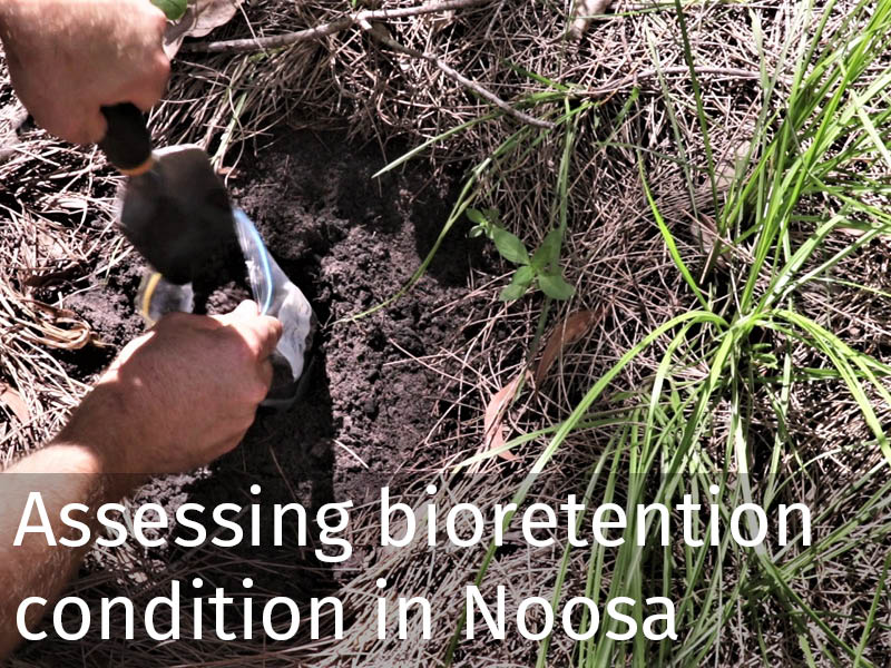 20180101 Noosa bioretention condition.jpg