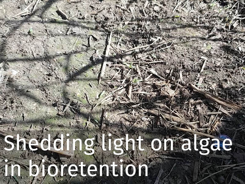 20150102 0243 Shedding light on algae in bioretention.jpg