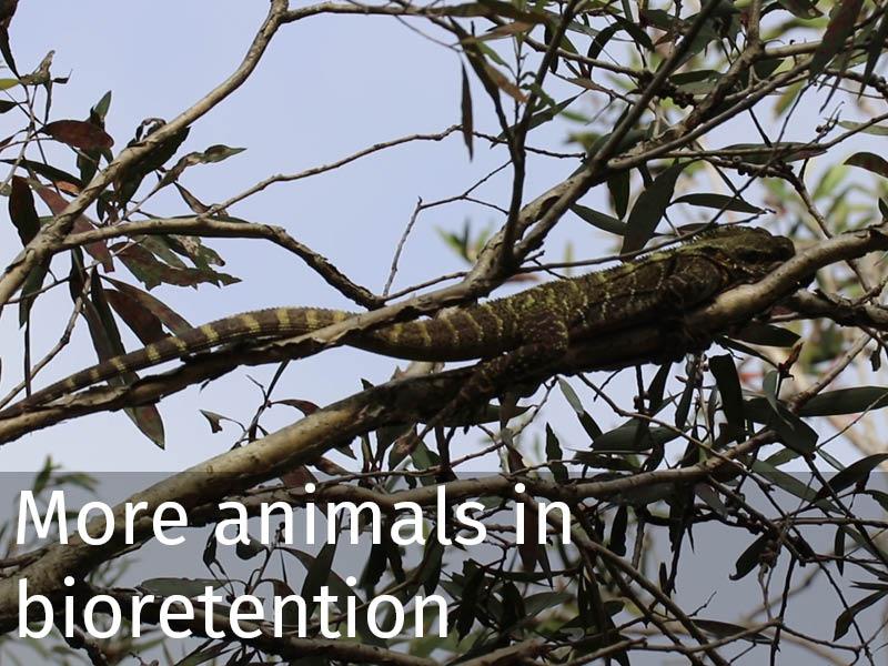 20150102 0252 More animals in bioretention.jpg