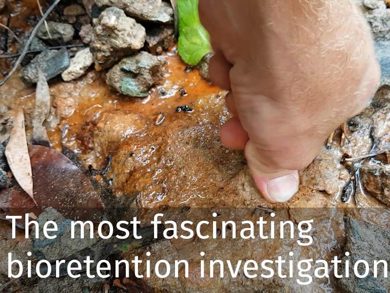 20150102 0254 The most fascinating bioretention investigation.jpg