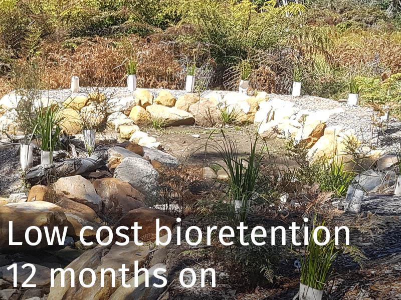 20150102 0261 Low cost bioretention 12 months on.jpg