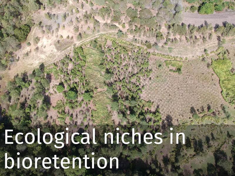 20150102 0267 Ecological niches in bioretention.jpg
