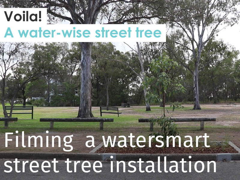 20190402 Filming watersmart street tree installation.jpg
