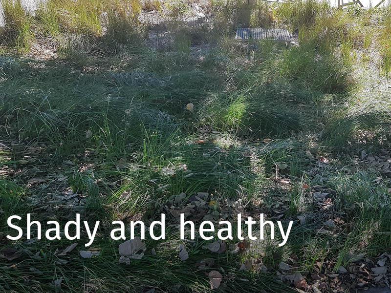 20150102 0271 Shady and healthy.jpg