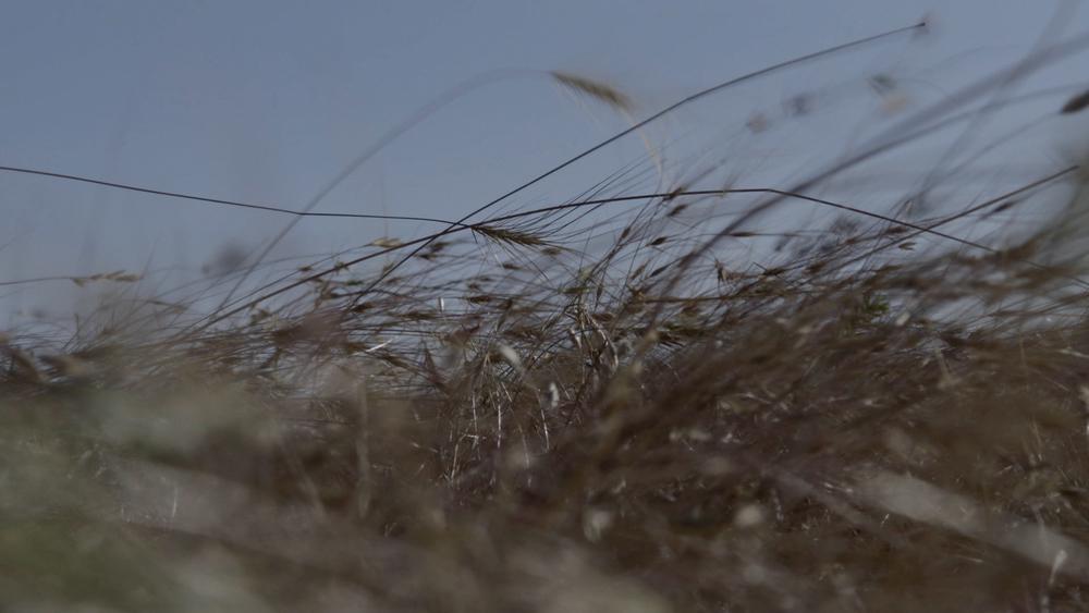 grass0.jpg