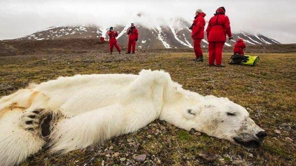 us-polar-bears