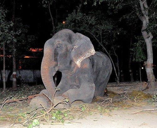 raju-elephant