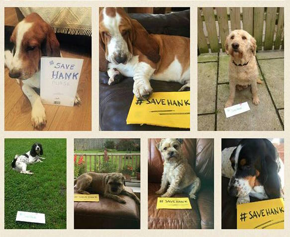 Pooch Power: These dogs helped Hank