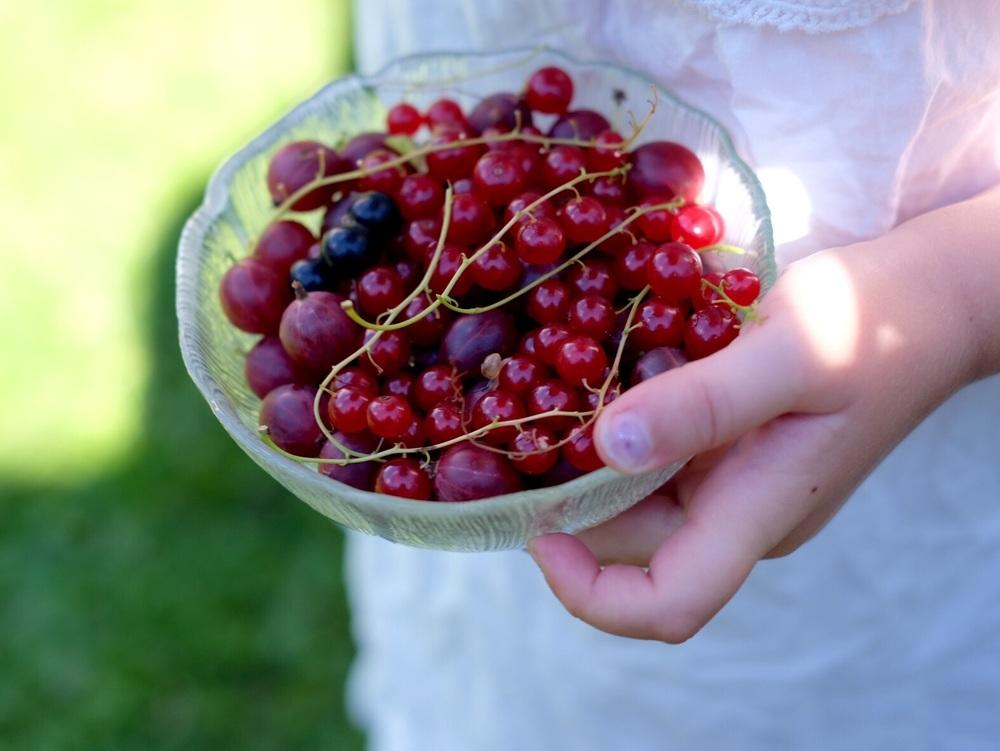 Norwegian Summer berries