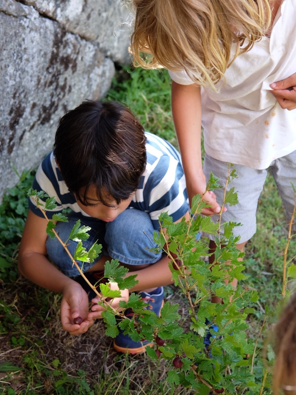 Picking berries is a fun activity!