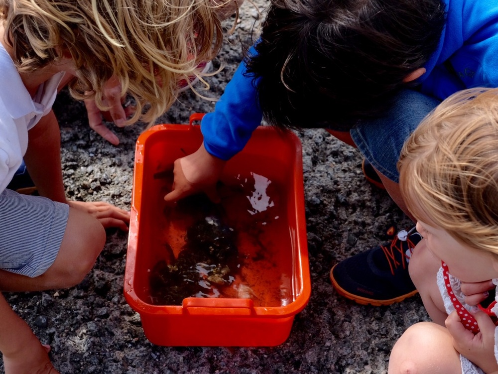 We got 3 big crabs!