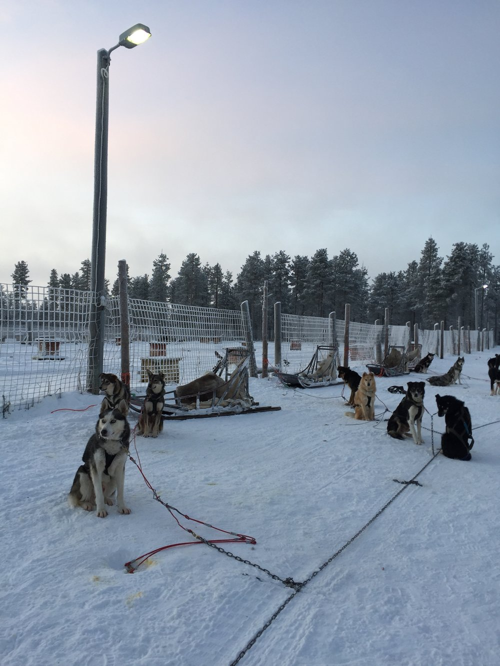 Building the sled teams