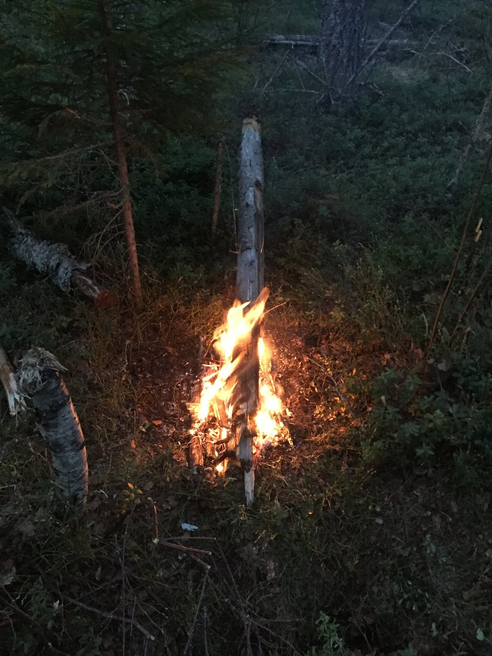 Burning my big dead pine, this one lasted all the way till morning.