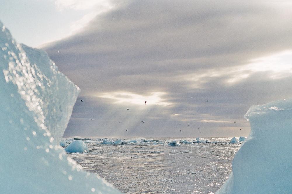 Vinterhagen01.jpg