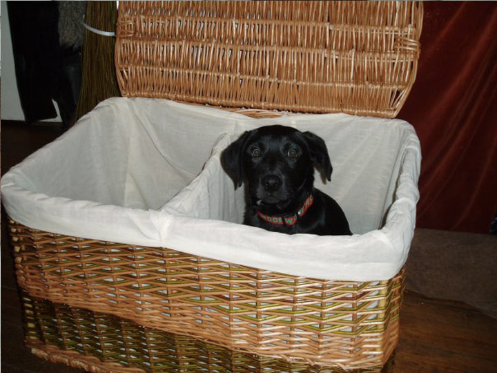 Double Laundry Basket (dog not included)£150