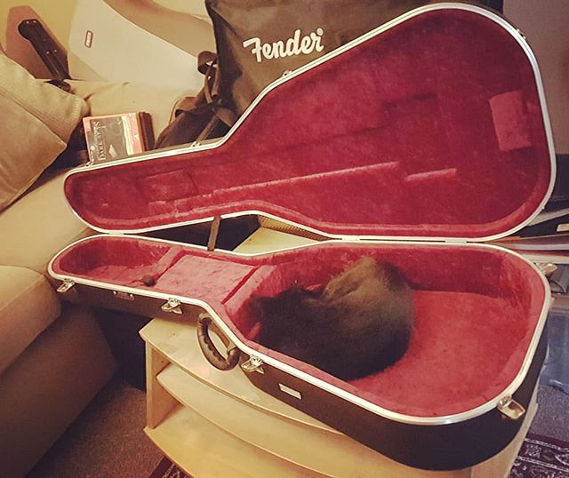 Thanks for me new nest, well comfy 🐾  #pussbag #rescuecat #tuxedocat #fender #guitarcase #cat