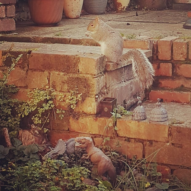 Squirrel impersonating a T-rex in the garden this morning  #youdontseethateveryday