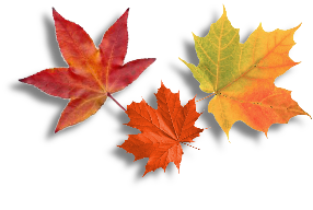Grouped leaves (shadow).png