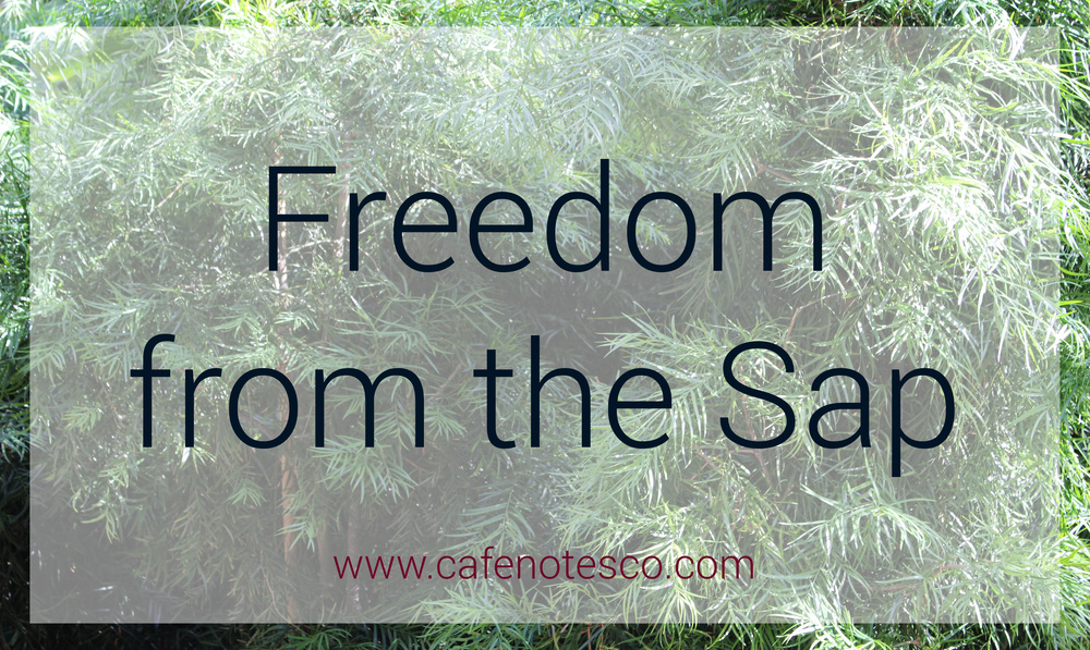 Cafe Notes + Company Blog Freedom from the Sap