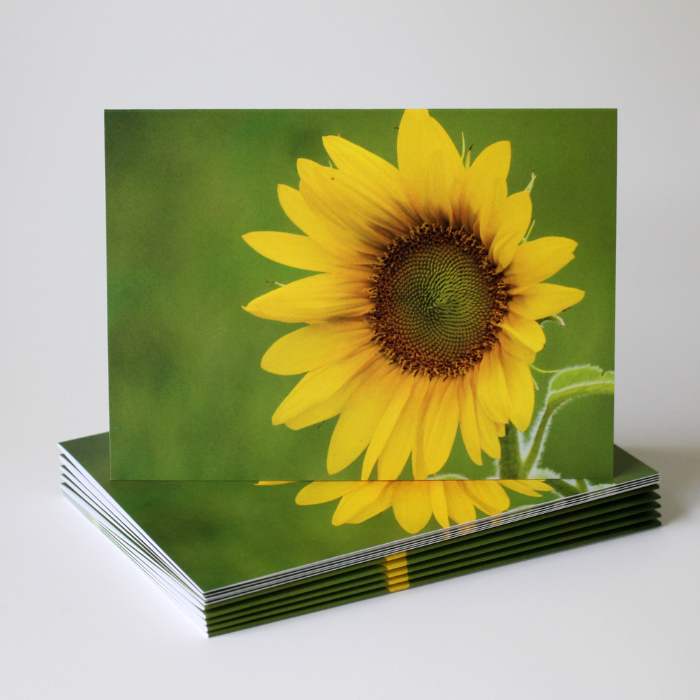 Cafe Notes + Company Sunflower Blank Card