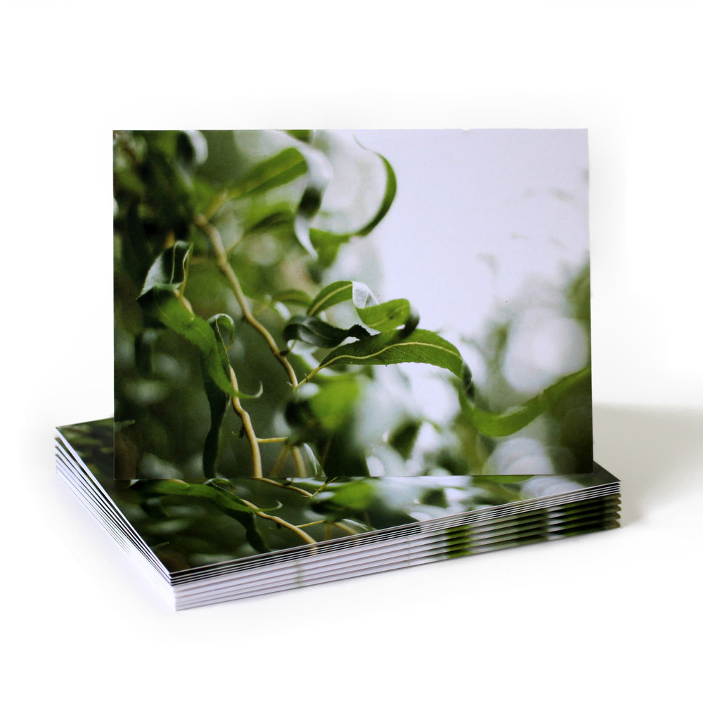 Cafe Notes + Company Weeping Willow Blank Card
