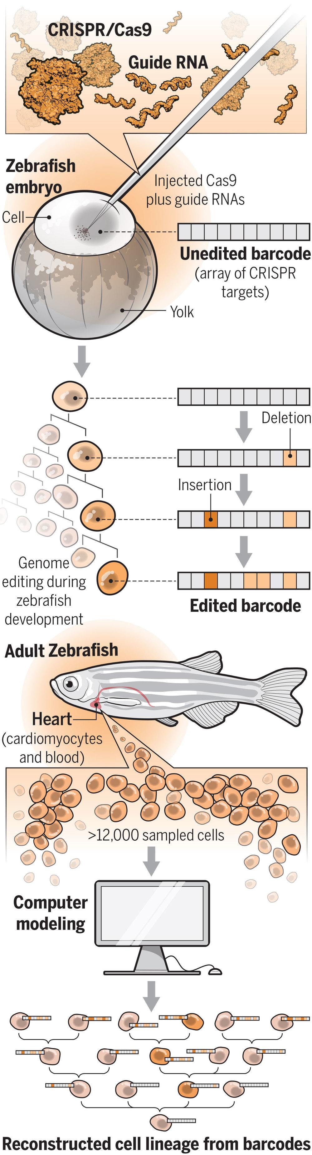 CRISPR_final_1.1_DRUPAL_highres.jpg