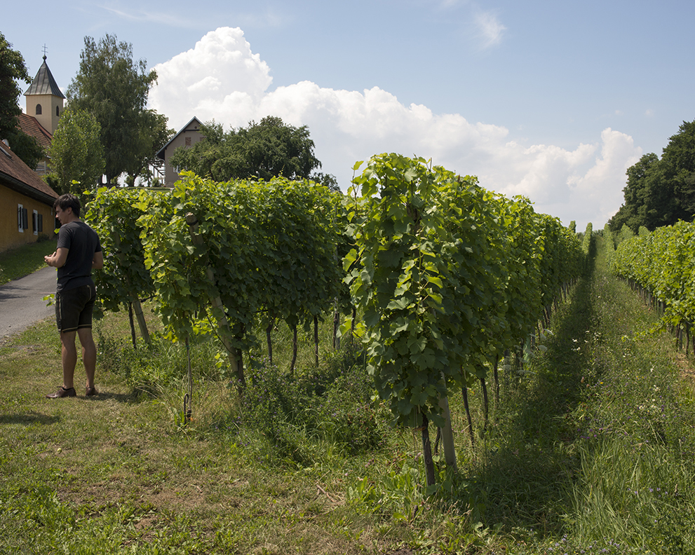 armin and vines.jpg