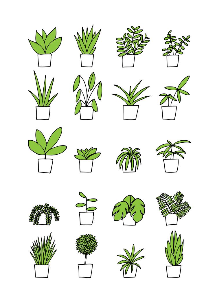 houseplants-image.jpg