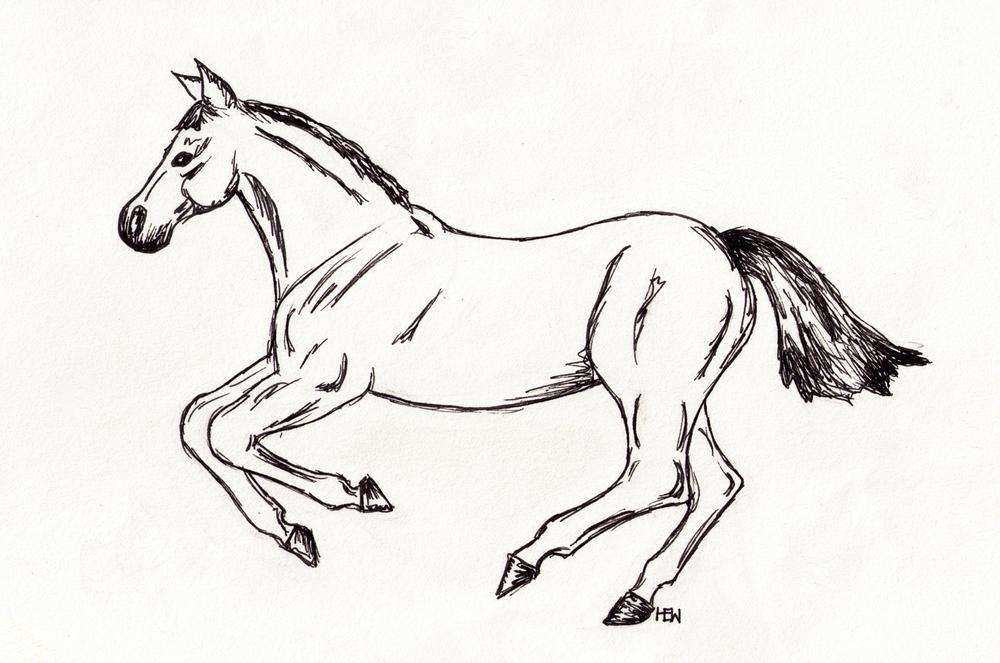 horse_01.jpg