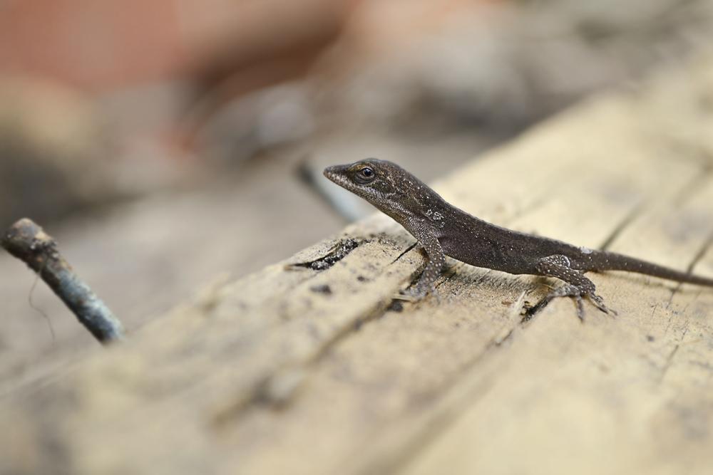lizard_2.jpg