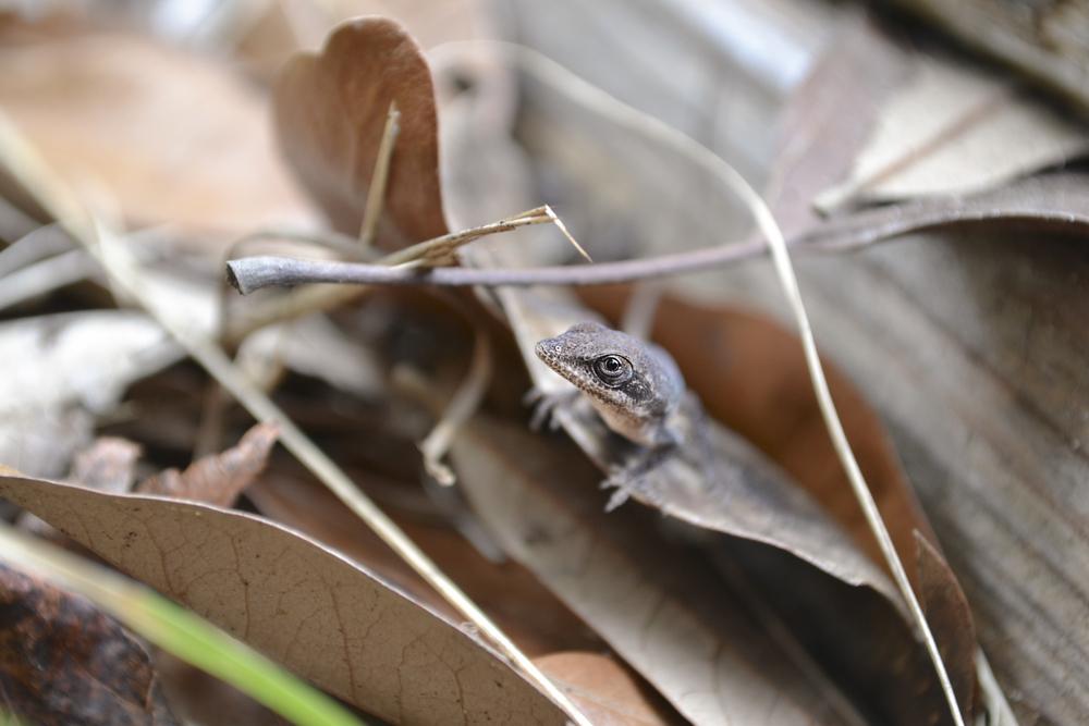 lizard_3.jpg