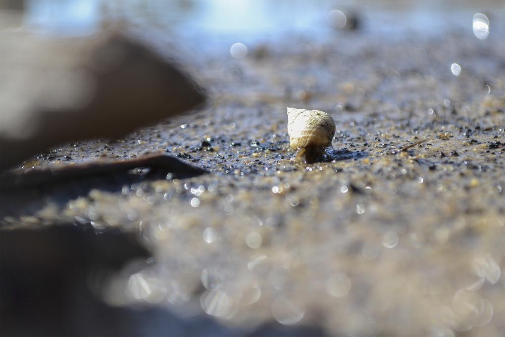 Snail_1_smaller.jpg