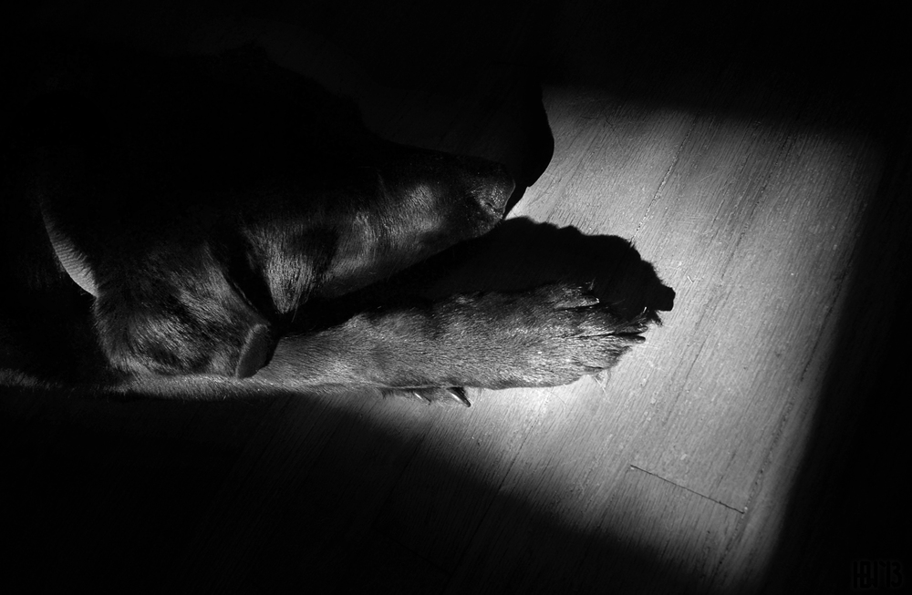 Freya_shadow.jpg
