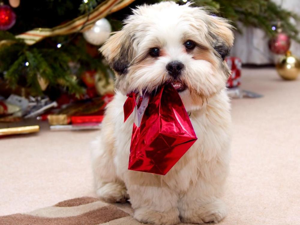 Gifts for pets are definitely on the Christmas shopping list for 2015. Image via petcollectionworld.com.