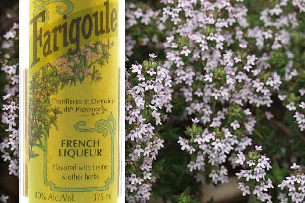 Farigoule Thyme Liqueur