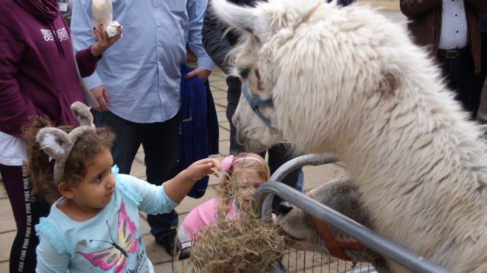 Kids with Teeny Tiny Animals.jpg