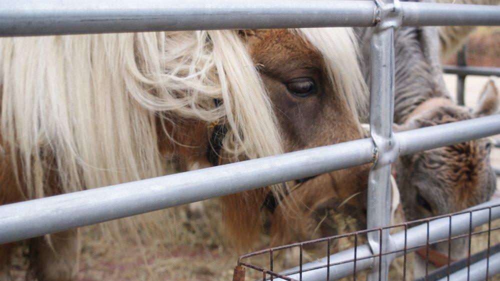 Teeny Tiny Horse.jpg