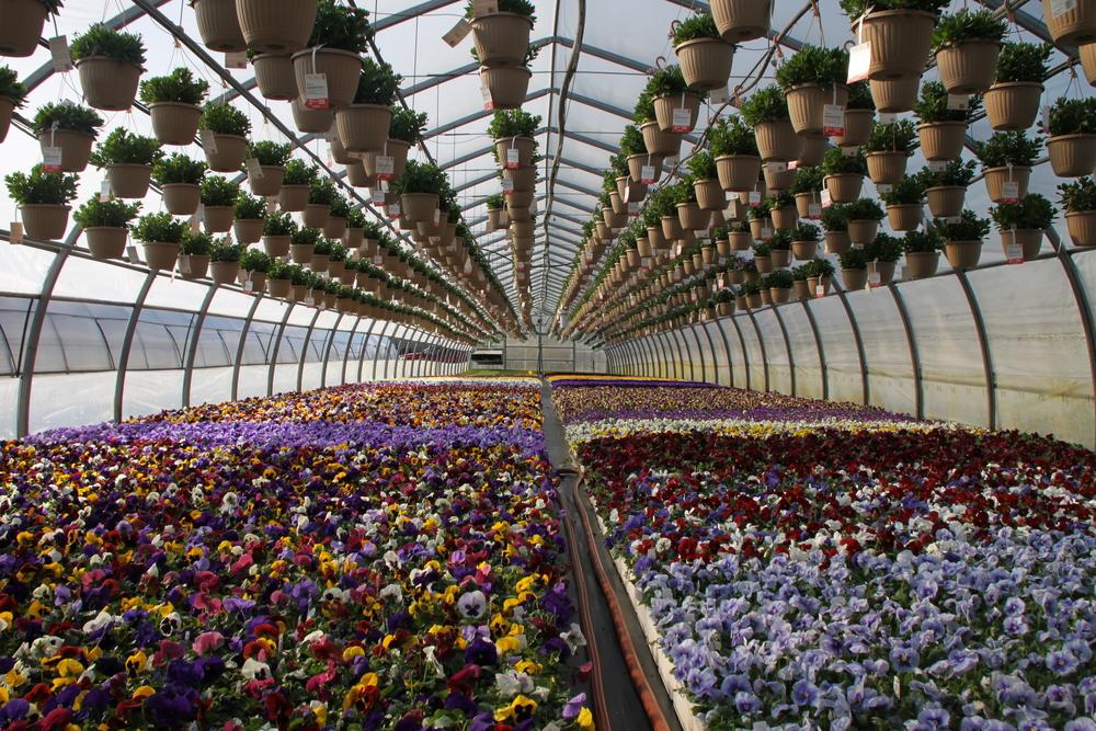 serres-de-fleurs-laval