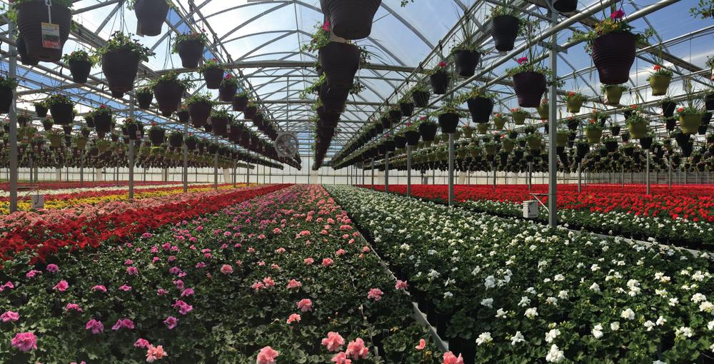 serres-fleurs-laval