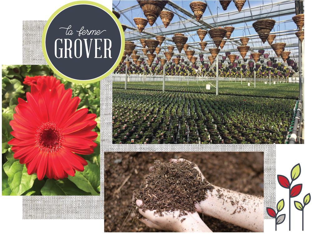 serres-pepiniere-fleurs-grover