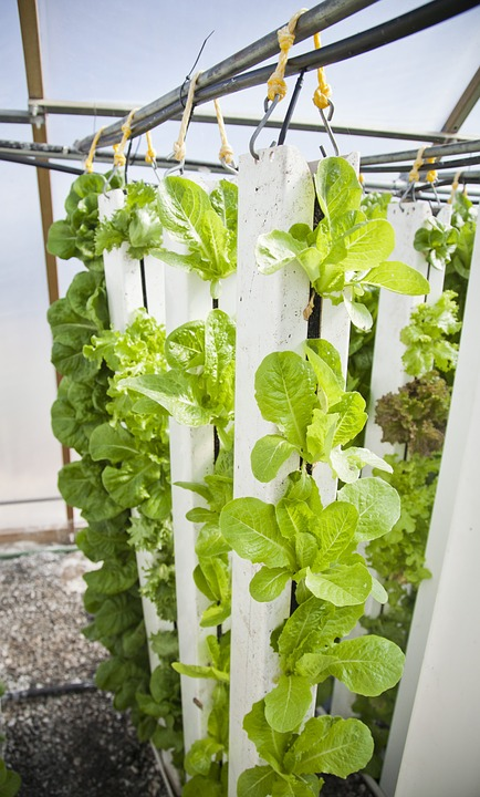 vertical-farm-916336_960_720.jpg