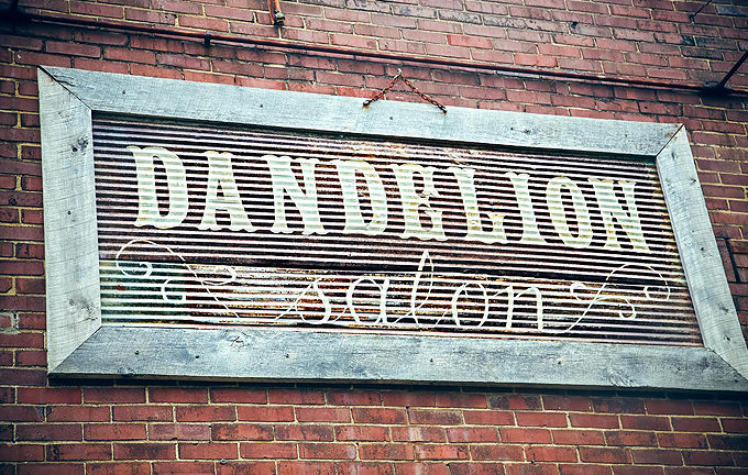 dandelion_gallery-1.jpg