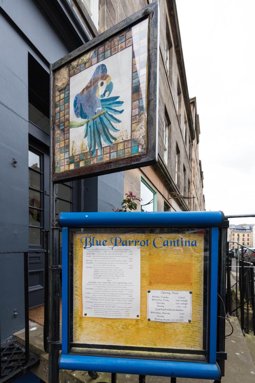 Blue Parrot.jpg