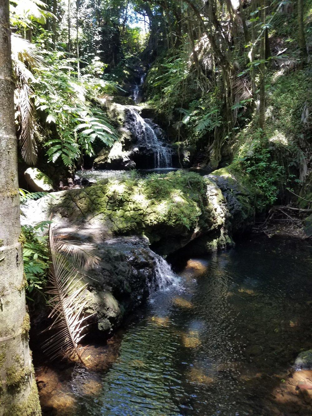 At the Hawaii Tropical Botanical Garden -