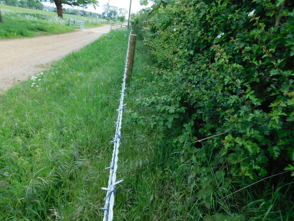 Hedge trimming is permitted until the start of March