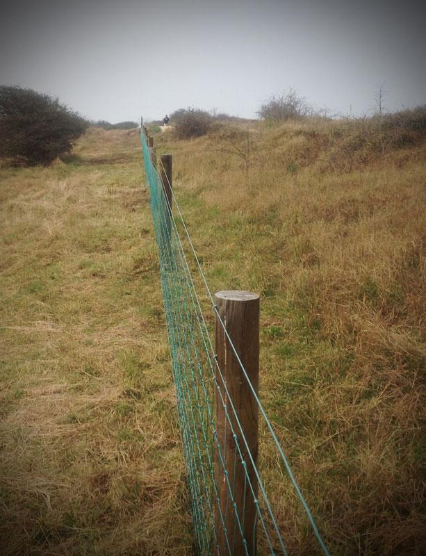fencing12.jpg