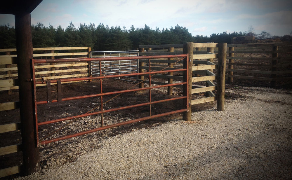 fencing11.jpg