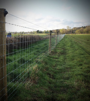 A fencing system that will keep livestock in and badgers out